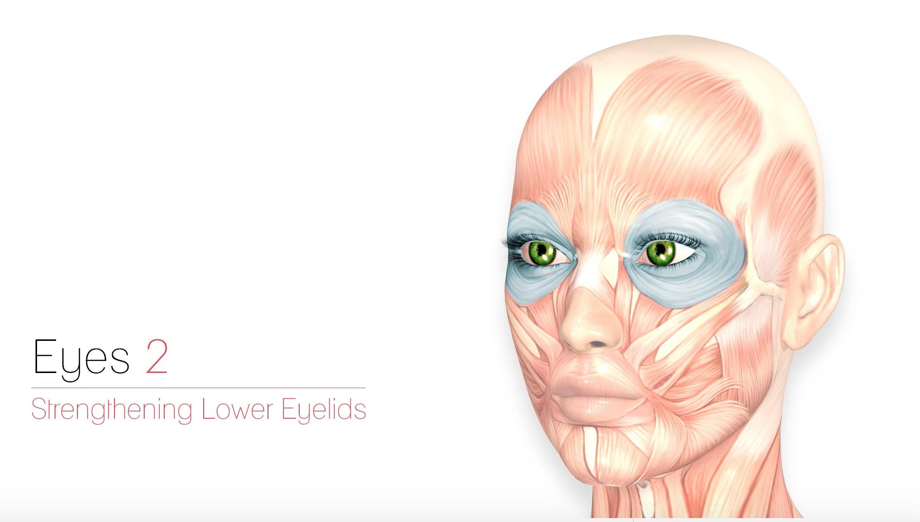 Eyes 2 – Strengthening Eyelids