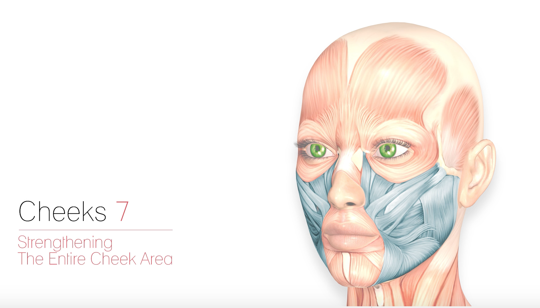 Cheeks 7 – Strengthening The Entire Cheek Area