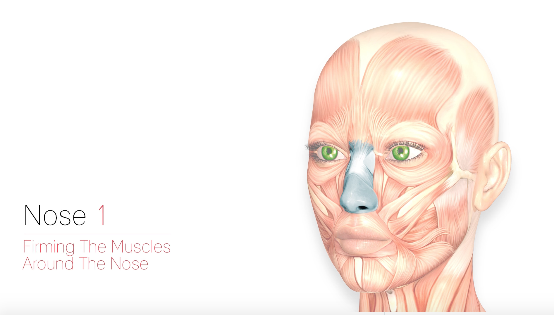 Nose 1 – Firming The Muscles Around The Nose